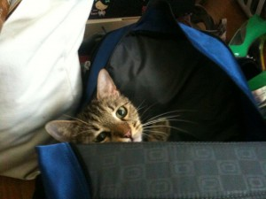 Cleo exposed in backpack